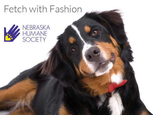 Fetch with Fashion